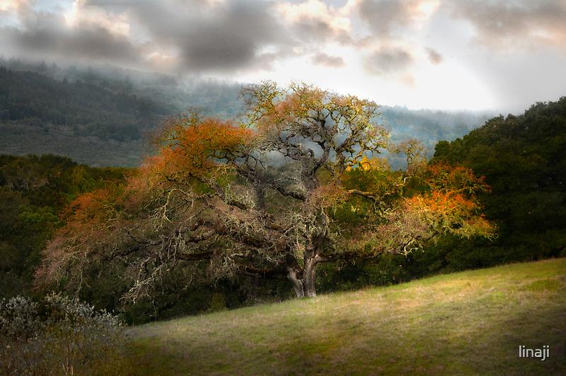 Magnificene in Oak by linaji