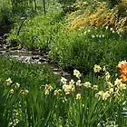 Stream to Bloom by RWaters