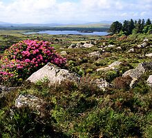 Rhododendron Landscape by Paul Mayall