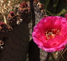 The cactus and the bee by Kwon Ekstrom
