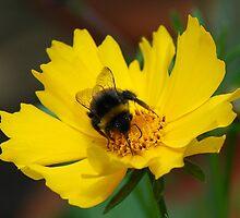 Bee-feaster by Marilyn O'Loughlin