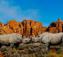 NOSE TO NOSE - BLACK RHINOS by Michael Sheridan