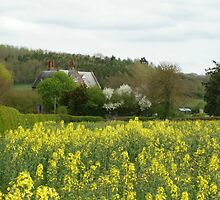 Rape Seed Cottage by missmoneypenny