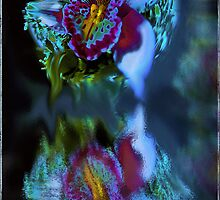 Blue Orchid by imagen