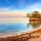 Mangrove Shore by njordphoto