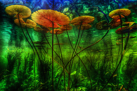 Underwater Lilies by David Rozansky