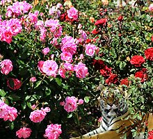 The tiger in the roses by happyphotos