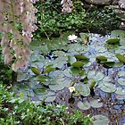 Lily Pond by JeffeeArt4u