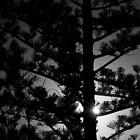 A Little Ray of Sunshine - Sunshine Coast by Damon Lancaster