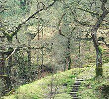 Path into wild woods Snowdonia by leunig