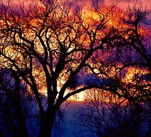 Burning Cottonwoods by Bo Insogna