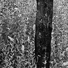 burnt post meadow by Phil Lane