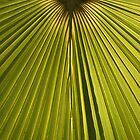 """""""Palms, Miami Beach, Florida"""" by Brad Starks"""