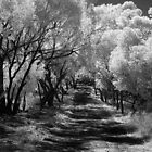 Country Lane ~ York, WA by Pene Stevens