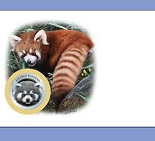 LESSER PANDA (as will be reproduced): PLEASE READ BLURB by owen bell