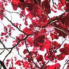 Red Leaves. by jordi2010