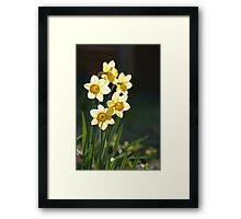 Sunny Daffodils Framed Print