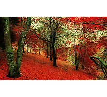 Autumn Magic Photographic Print