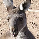 Rude Kanga by Rick Playle