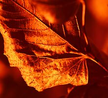 Leaves by igorsin