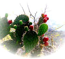 Ecuador Badlands Cacti by Al Bourassa