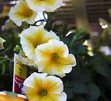 Garden Center Series by Wendy Mogul