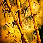 Tropics.. Heat and Old Bamboo by  Janis Zroback