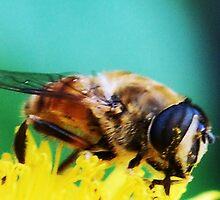 BEE COOL by Terra 'Sunshine' Gilbert
