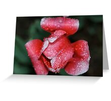 Pink for Breast Cancer Awareness (Tulip) Greeting Card