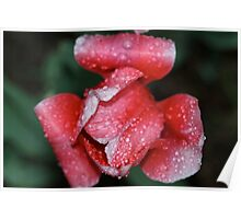 Pink for Breast Cancer Awareness (Tulip) Poster