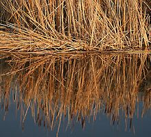 Golden Bull Rushes by Vickie Emms