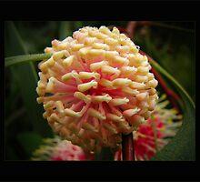 gum bloom II by vampvamp