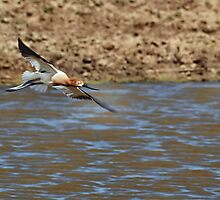 Long Legs and Rusty Heads by Barb Miller