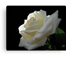 Single White Rose. Canvas Print