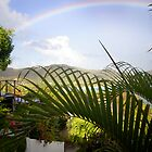 St. Barthelémy Rainbow by Missy Lamb