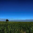 Lonely Tree by Michael Brewis