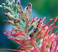 Busy bee by Colleen Sattler