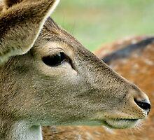 Bambi by Tamara  Kenneally