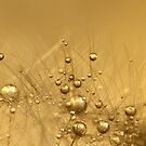 Liquid Gold by Sharon Johnstone