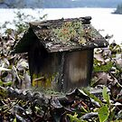 weathered birdhouse by Lee Anne French
