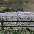 Lavender Dream by Brian Gaynor