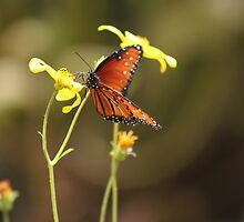 Nectar in the afternoon - butterfly & flowers by Livingimages
