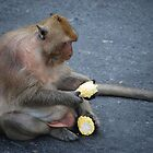 Thai Monkey by Lorne6575