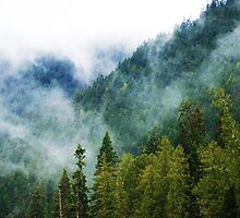 Mountain Fog by Tori Snow
