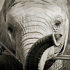 Baby Elephant by Benjamin Vess