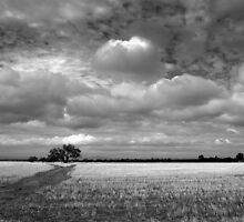 Scary Tree - Wilmington Wheat Field by Ben Loveday