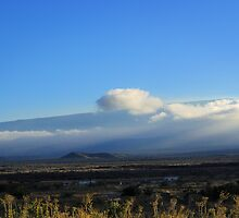 Mauna Loa View  by Ellen Cotton