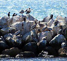 Pelican Neighborhood 1136 by eruthart