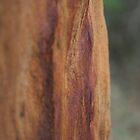 Tree Bark by Smarsh