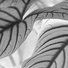 Leaf study #1 by Emma Sterling